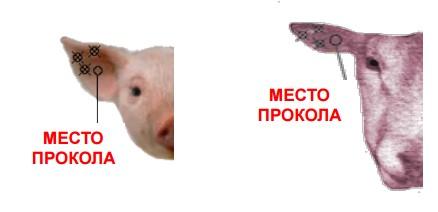 birka-9